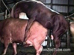 Hardcore stallion impaled sweet brown cow from behind